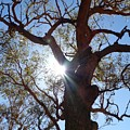 Sun Tree by Nigel Photogarphy