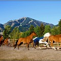 Sun Valley Stables by Amy G Taylor