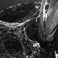 Sun Web by Jonathan Donovan