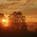 Sunbeam Through Cottonwoods by Sally Dalton