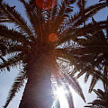 Sunbeams Through The Palms by Jacqueline Moore