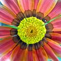 Sunburst by Heather S Huston