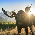 Sunburst In The Antlers by Tim Grams