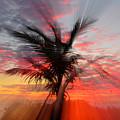 Sunburst Through Palm Tree by Dick Hopkins