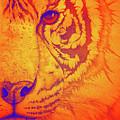 Sunburst Tiger by Mayhem Mediums