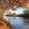 Sunbury On Thames Surrey Uk by Julia Gavin