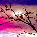 Sundown by Holly Kempe