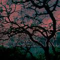 Sundown by Tim Tanis