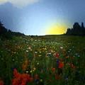 Sundown Wildflower Meadow by RC DeWinter