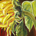 Sunflower - Over Easy by Marjory Wilson