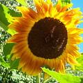 Sunflower 103 by Ken Day