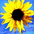 Sunflower 12 by Marty Koch