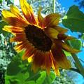 Sunflower 121 by Ken Day