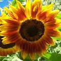 Sunflower 140 by Ken Day