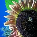 Sunflower 142 by Ken Day