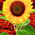 Sunflower 2 by Bob Slitzan