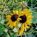 Sunflower 2 by Jeelan Clark