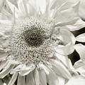 Sunflower 4 by Simone Ochrym