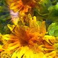 Sunflower 6 by Pamela Cooper