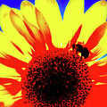 Sunflower Abstract by Yvette Wilson