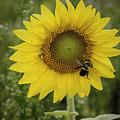 Sunflower Among The Weeds by Debra Fedchin