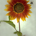 Sunflower And Bee by Sandi F Hutchins
