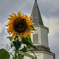 Sunflower And Steeple by Jerry Gammon