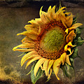 Sunflower Art 2 by Sari Sauls
