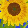 Sunflower Art by Deborah Benoit