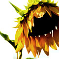 Sunflower Art by Robin Lynne Schwind