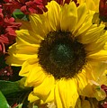 Sunflower Boquet by Jim  Darnall