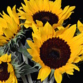 Sunflower Bouquet by Jeannie Rhode