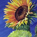 Sunflower by Cheryl Johnson