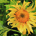 Sunflower by Chris Steinken