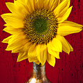 Sunflower Close Up by Garry Gay