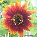 Sunflower by Craig Sulser