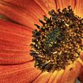 Sunflower Dance by Deborah Benoit
