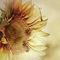 Sunflower Days by Susan Capuano