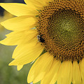 Sunflower by Debra Fedchin