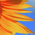Sunflower Elegance by Jane Izzy Designs