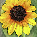Sunflower Expressed by Tom Janca