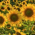 Sunflower Family by Mark Kiver