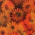 Sunflower Field 1.2 by Ian Spicer