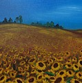 Sunflower Field 3 by Nancy Self