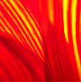 Sunflower Fire 3 by Nathan Little