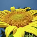 Sunflower Garden Art Print Yellow Summer Sun Flower Baslee by Baslee Troutman