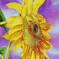Sunflower Gold by Cynthia Pride
