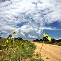 Sunflower Hitchhikers by Brad Hodges