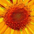 Sunflower In The Sun by Lizi Beard-Ward