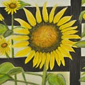 Sunflower In Your Face by Teresa French McCarthy